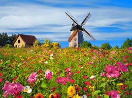Country Summer Flowers A Windmill In Fields Nature Background Wallpapers On