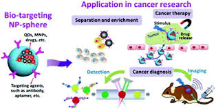 multifunctional nanoparticle developments in cancer diagnosis and