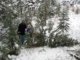 Colorado Springs Christmas Tree Permit 2014 by Wednesday Woodland Word Vol 4 No 46 National Woodland Owners