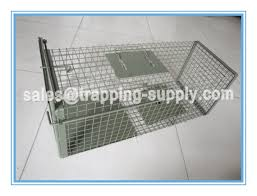 live cat trap home depot collapsible feral cat traps live animal trap cage for