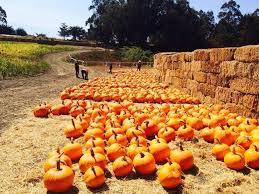 Pumpkin Fest Half Moon Bay by A Great Pumpkin Getaway To Half Moon Bay U2013 The Mercury News