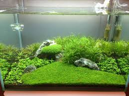 120 best Aquariums Aquascapes images on Pinterest