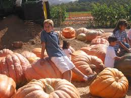 Underwood Farms Pumpkin Patch Hours by Underwood Family Farms In Moorpark Ca Yellowbot