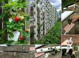 Vertical Strawberry Tube Planter Weaver Jessee Can We Plant One Of These