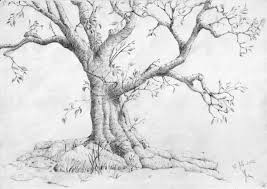 Drawings Trees Drawing Color Pond Roots Tree My Art Pinterest Tree