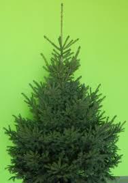 Usda Christmas Tree Permits Colorado by Spruce Colorado Green U0027ali U0027 Thetreefarm Com