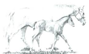 Horse Coloring Page A Of Pages Spirit And