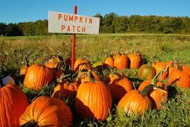 Puyallup Pumpkin Patch by Seattle U0027s Best Pumpkin Patches