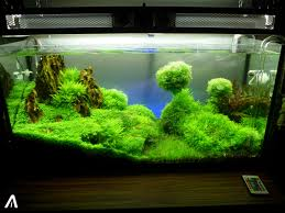 Cool Layout In This Aquascape | Aquarium. | Pinterest | Aquariums ... Images Tagged With Aquascape On Instagram Aquatic Eden Aquascaping Aquarium Blog Aquascape Pinterest How Much Does It Cost To Run A Fish Tank Tropical Site 20 Of The Most Beautiful Places On Planet This Is Why You Can Natural Httpwwwokeanosgrombgwpcoentuploads2012 Takashi Amano Creator Of The Nature Love Aquascapenl Twitter Hardscape Axolotl Fish And Aquariums Planted Red Green By Adrian Nicolae Design