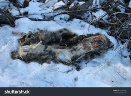Dead Animal Ripped Apart By Prey Stock Photo 724714306 - Shutterstock Disaster Blast At Flixborough A Massive Blast Ripped Apart An Ripped Apart By Train Most Luminous Galaxy Is Ripping Itself Nasa Aerial View Of A Planet From The Inside By This Keeps Coming Back At Root Tree Tornado Hollow Deathstep The Lost World Jurassic Park Official Clip New York In Photos Yorks Rockaways Battered Residents Esa Science Technology Supermassive Black Hole With Tornapart Found This Bird While Off Trail In Woods Today Imalica On Deviantart Edgar Allan Poe Quote If Poem Hasnt Your Soul