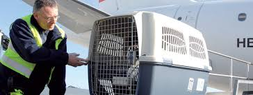The International Aviation Authority IATA Has Laid Down Regulations For Transport Containers SWISS Strictly Adheres To These Rules Reasons Of Animal