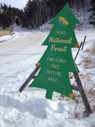 Christmas Tree Permits Colorado Springs by National Forests Open For Annual Christmas Tree Cutting Krcc