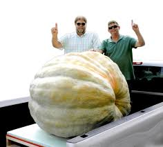 Atlantic Giant Pumpkin Record by Vanhook Brothers Are Pumpkin Champs News Thetimestribune Com