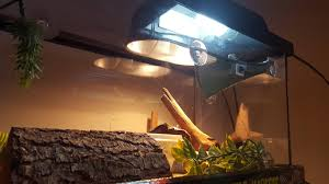 Uv B Lamp For Vitamin D Uk by Lighting Questions U2022 Bearded Dragon Org