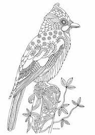 Bird Illustration By Keiti