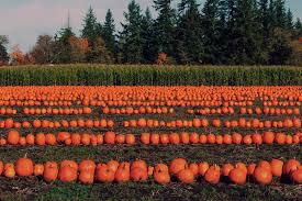 Pumpkin Picking Near Syracuse Ny by Sean Keeley Profile And Activity Curbed Seattle