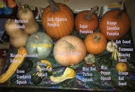 Varieties Of Pumpkins by Pumpkin Week Part One Sugar Spice And Glitter