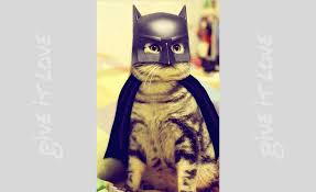 cat batman costume 105 cat costumes that will make you smile page 8 of 98