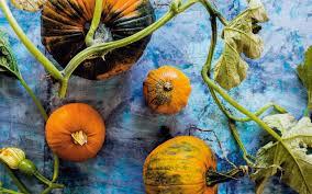 Varieties Of Pumpkins Uk by Diana Henry U0027s Ultimate Pumpkin Recipes
