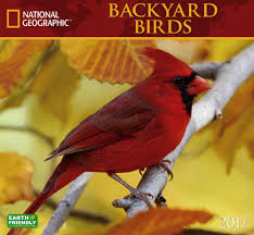 2017 Backyard Birds National Geographic Wall Calendar - National ... National Geographic Backyard Guide To The Birds Of North America Field Manakins Photo Gallery Pictures More From Insects And Spiders Twoinone Bird Feeder Store Birds Society Michigan Mel Baughman Blue Jay Picture Desktop Wallpaper Free Wallpapers Pocket The Backyard Naturalist 2017 Cave Wall Calendar