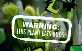 how to care for a venus flytrap behnke nurseries garden center