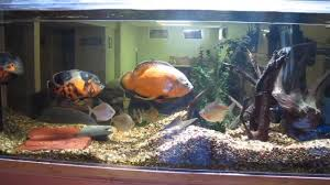 Star Wars Fish Tank Decorations by Fish Tank Decorations For Oscars Go Back U003e Gallery For U003e Oscar