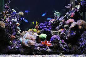 trucs et astuces pour démarrer aquarium d eau de mer