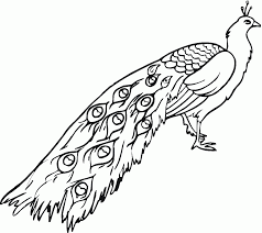 Good Peacock Coloring Page 96 With Additional Picture