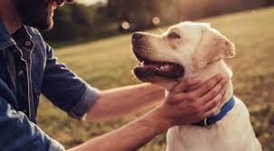 The 10 Best CBD Oils For Dogs (and Other Pets) For 2019   RAVE Reviews Best Cbd Oil For Dogs In 2019 Reviews Of The Top Brands And Grateful Dog Treats Canna Pet King Kanine Coupon Code Review Pets Codes Promo Deals On Offerslovecom Hemppetproducts Instagram Photos Videos Cbd Voor Die Diy Book Marketing Buy Cannabis Products Online Mail Order Dispensarygta April 2018 Package Cannapet Advanced Maxcbd 30 Capsules 10ml Liquid V Dog Coupon Finder Beginners Guide To Health Benefits Couponcausecom Purchase Today Your Chance Win A Free Cbdcannabis Hashtag Twitter