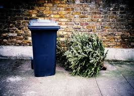 Christmas Tree Recycling Trash FL 560x400