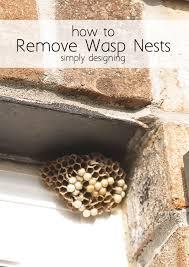 best 25 wasp nest ideas on ceramics international