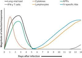 Asymptomatic Viral Shedding Influenza by Review Influenza Virus In Pigs Sciencedirect