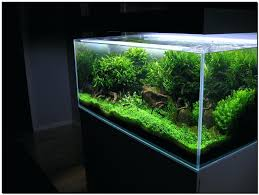 Aquascaping Forum – Homedesignpicture.win Hamsa Wabikusa Style Aquascaping World Forum Httpwww Nature Aquarium And Aquascaping Wiki 25l Nano Capa 2011 French Aquascapers Results My Scape Iaplc Rank 70 The Passing Of Legend Takashi Amano Magazine With Nicolas Guillermin Surreal Submarine Amuse Aquascape The Month August 2010 Beyond Riccardia Chamedryfolia Question This Is Ada 2009 Susanna Aquascape Garden Bonsai Plants
