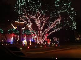Alameda Christmas Tree Lane by Alameda Christmas Lights Little Hiccups Alameda Christmas Tree