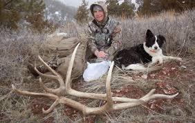 Shed Hunting Southern Utah by 28 Shed Hunting Dogs Utah Saskatchewan Shed Hunting Odyssey