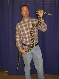 Coastal Carpet Python Facts by Jungle Carpet Python Snakes Pinterest Python And Reptiles