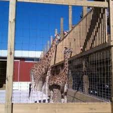 Pumpkin Farm Illinois Giraffe by Goebbert U0027s Farm U0026 Garden Center 322 Photos U0026 206 Reviews
