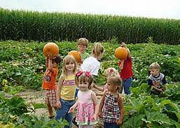 Schaake Pumpkin Patch by Pumpkin Patch Kansas City Children U0027s Activities Kc Kids Fun
