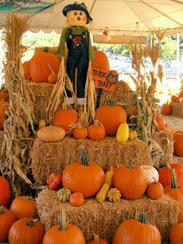 Pumpkin Patches Near Temple Texas by Owl Creek Pumpkin Patch