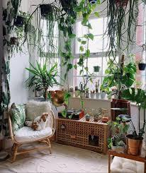 gärtnern im wohnzimmer links das sofa rechts das