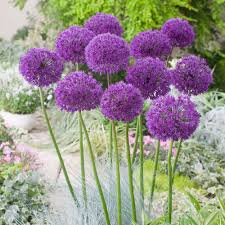 flower bulbs ebay
