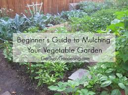 Beginner s Guide to Mulching Your Ve able Garden