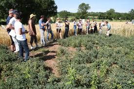 chambre agriculture haute loire visite d essais les protéagineux des cultures pleines d atouts