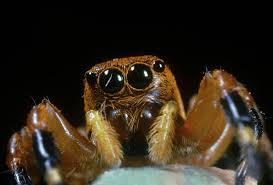 Remains Of The Day Spiders by 10 Fascinating Facts About Spiders