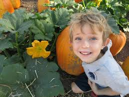Lane Farms Pumpkin Patch 2015 by Pumpkins Swoop Into Kindergarten
