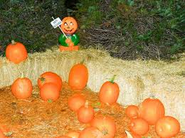 Canby Pumpkin Patch by Pamplin Media Group Families To Find Frights On Fantasy Trail