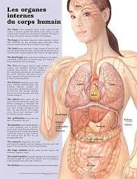 interieur corps humain femme um olhar sobre a cultura francesa planche les organes internes du
