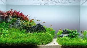 Take A Look At This Awesome Aquascape And Get Inspired! You Can ... King5com Fding Zen Through Aquascapes The Worlds Newest Photos By Pacific Aquascape Flickr Hive Mind Pacific Aquascape 28 Images Westin Photo Courtesy Of Christian Another Beautiful Pool Aquascapes For Luxury Living In Swimming Pool Contractors In Oahu Hi Aquascapes Ada Aquascaping Contest Homedesignpicturewin Submerged Jungle Fekete Tamas Awards Jungle 241 Best Aquatic Garden On Pinterest Aquascaping 111 Amazing Aquariums And The666 Extreme18