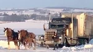 100 Truck Pulling Videos Burly Minnesota Horses Pull Semi Up Icy Driveway The
