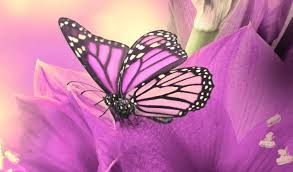 Pink Butterfly Wallpaper Mobile DownloadSmartphone